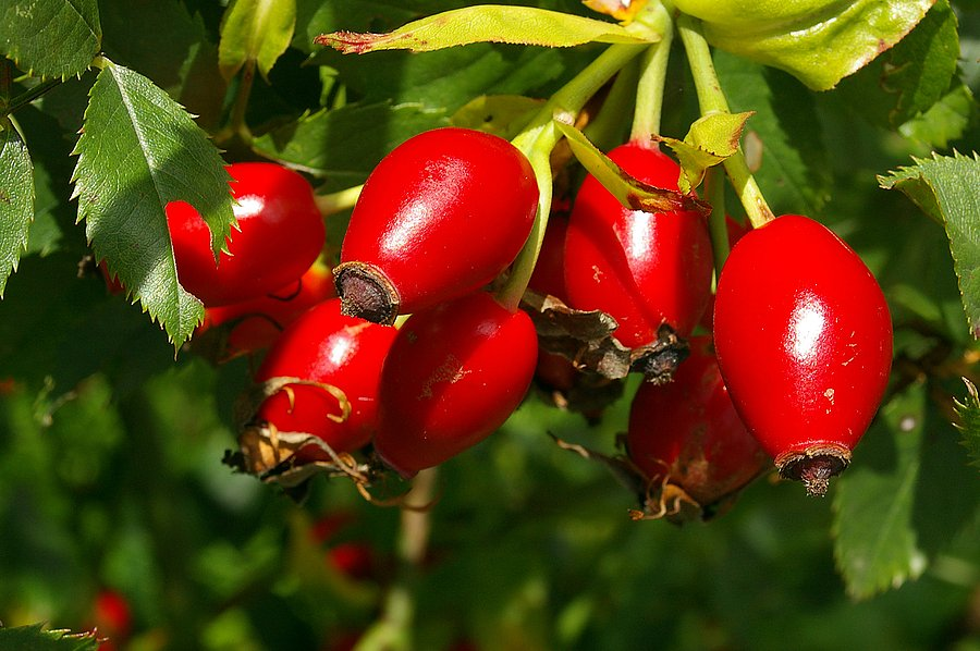 Plody podzimu a dobroty z nich